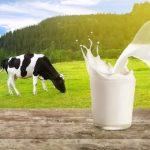 ghani-group-dairy-milk