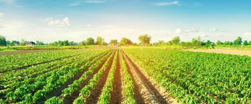 Agro-Farming-Banner