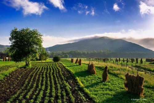 Agro-Farming