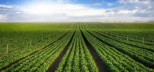 Farms-Banner